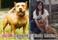 ประวัติ Camelot's Blaze Maxine