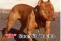 PR Sarona's Trouble