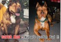 Super Bud - Kubar's Golden Bud !!