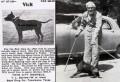 ไลท์เนอร์ วิค An 1910's Old Family dog most modern OFRN dogs trace back to