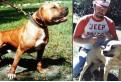 การเร็ทแชมเปี้ยน จี๊ฟ ชนะ 4 แมทซ์ กีฬาการต่อสู้ สุนัขพันธุ์อเมริกันพิทบูลเทอร์เรีย