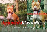 <b>Notice</b>: Undefined index: name in <b>/home/pitbullz/public_html/new/catalog/view/theme/pitbullzone/template/extension/module/knowledge.tpl</b> on line <b>92</b>