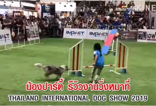 น้องปาร์ตี้ รีวิวงานวิ่งหมาที่ Thailand International Dog Show 2019
