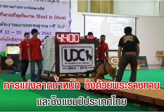 การแข่งลากน้ำหนัก ชิงถ้วยพระราชทาน และชิงแชมป์ประเทศไทย !!