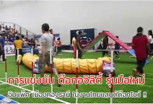 การแข่งขันด๊อกอะจิลิตี้ รุ่นมือใหม่ ในสายจูง .. สนาม อิมแพ๊ค เมืองทองธานี ในงานไทยแลนด์ด๊อกโชว์ !!