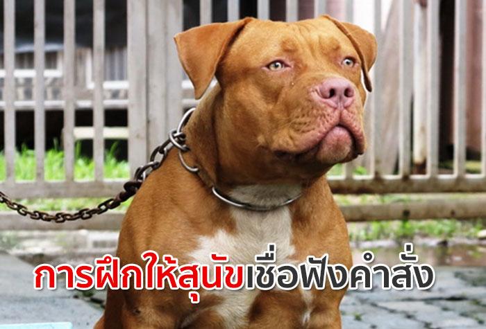 การฝึกให้สุนัขเชื่อฟังคำสั่ง